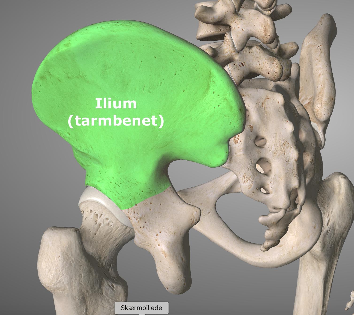 Bækkendysfunktioner ved ilium